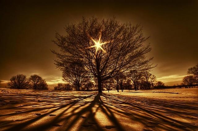 arbre-de-la-vie-640x425